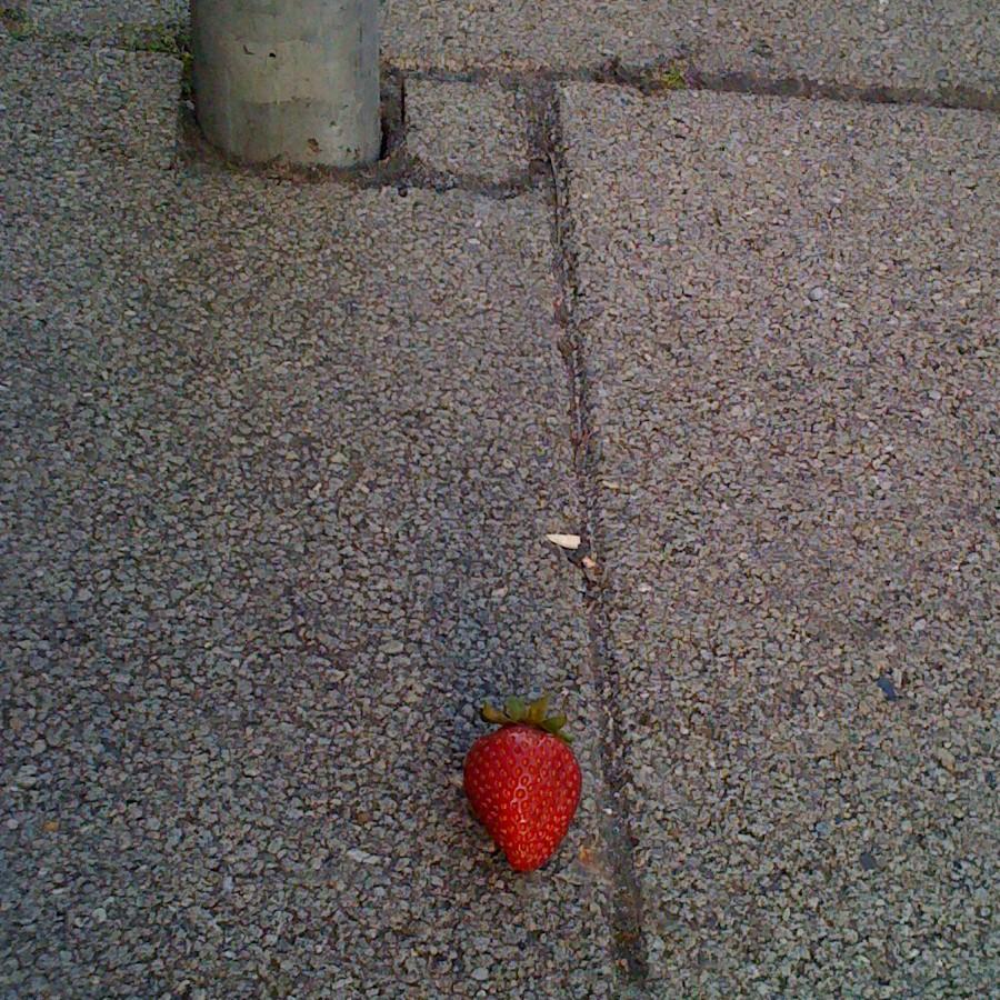 Trilobite's sidewalk Oddity